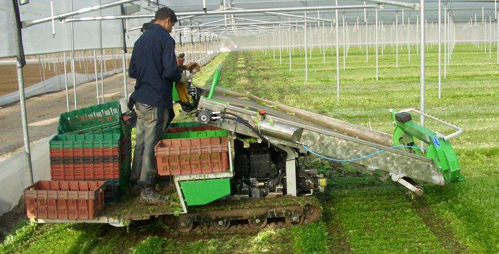 Agricoltura-Allevamenti-6